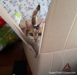Read more about the article Happy Pets = Happy Humans: Cats And Dogs In A Tiny House
